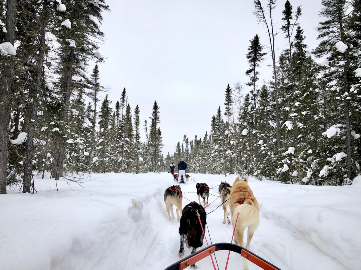 Chilly Dog Sled Dog Trips