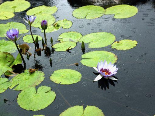 Charlotte Partridge Ordway Japanese Garden